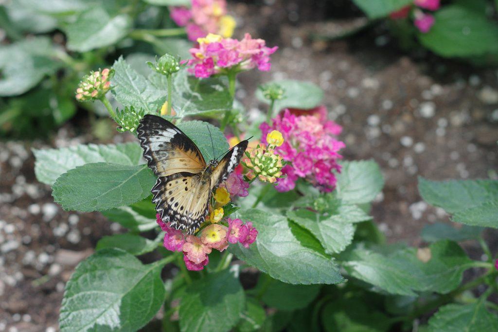 02-Steve-Bensing-Spring-Butterfly-0918-IMGP8315